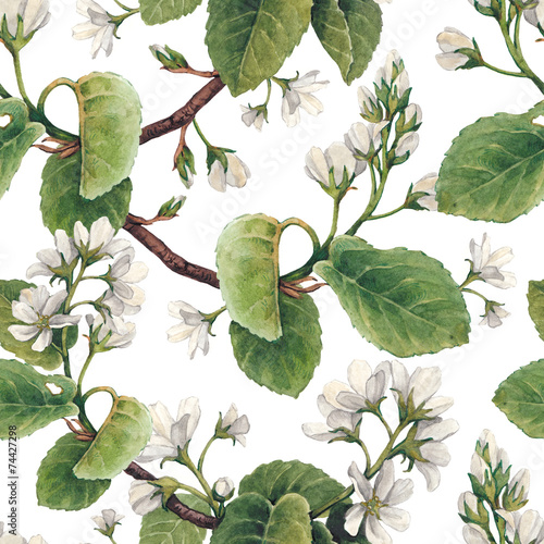 Pattern with watercolor apple flowers - 74427298