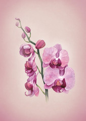 Greeting card with watercolor orchid flowers