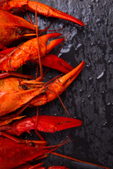Crayfish on a black background