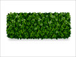 boxwood decorative fence - 74433010