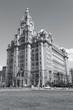 Royal Liver Building. Black white photo.