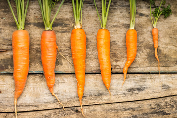 Fresh ripe carrots luing on wooden background.