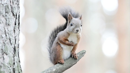 Funny squirrel on the tree