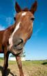 Obrazy na płótnie, fototapety, zdjęcia, fotoobrazy drukowane : Horse face