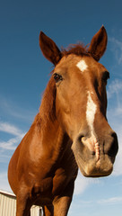 A brown horse leaning to the camera.