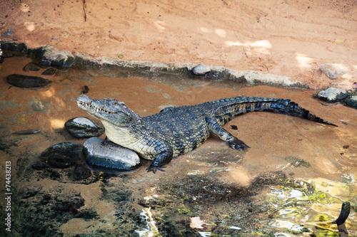 Foto op Plexiglas Krokodil Crocodile in the water.