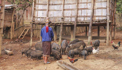 woman feeding pigs