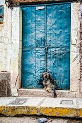 Cane alla porta