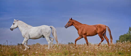 Grey and  red stallions on blue sky background