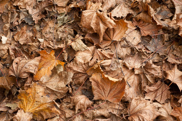 foglie a terra