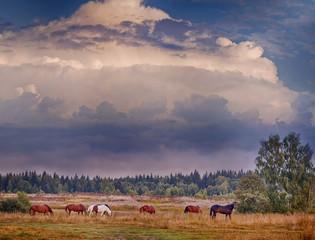 Herd of horses grazing in evening field