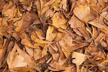 tante foglie