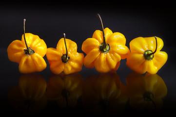 Yellow habanero peppers