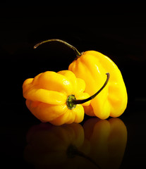 Yellow habanero peppers