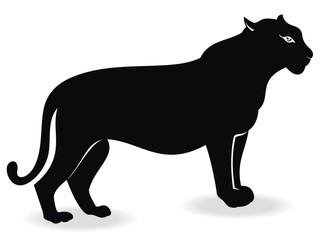 Black cougar