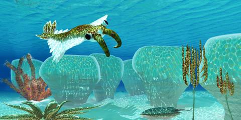 Ocean Anomalocaris