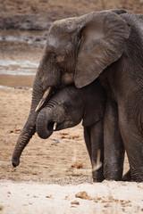elefanti tanzania abbraccio