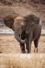 elefante tanzania bagno