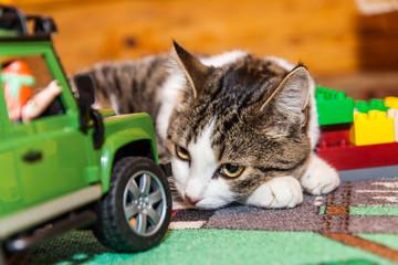 Katze - Haustier mit Spielzeug beim Entspannen