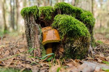 Pen and mushroom