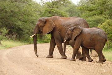 elefante mammifero selvaggio del sudafrica