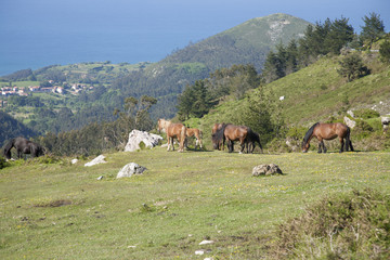 group of horses grazing sea beyond