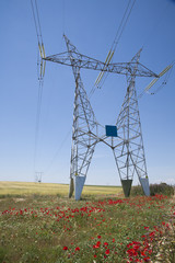 next to electric towers in roses field