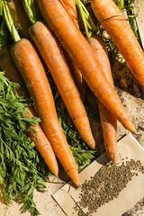 Mohrrüben und Möhrensamen, carrots and seeds