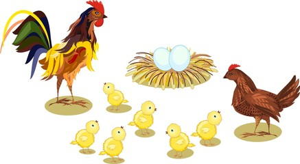 Hen and brood of chickens