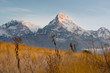 Постер, плакат: Himalayan snow mountain view with grassland foreground blurred