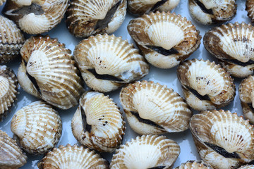 closeup of cockles(scallop) for food background