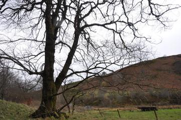 autumn landscape dead wood