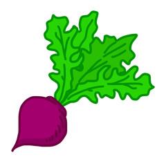 turnip isolated illustration