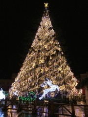 Christmas tree in Brasov,Romania