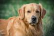 Portrait young beauty dog