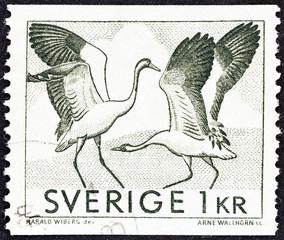 Dancing cranes (Sweden 1968)