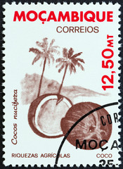 Coconut (Mozambique 1981)