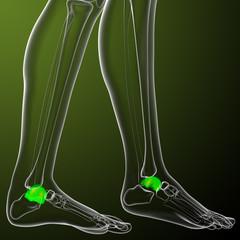 3d render medical illustration of the talus bone