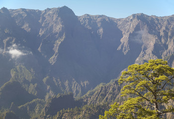 Pine tree detail and mountain. La Palma. Spain
