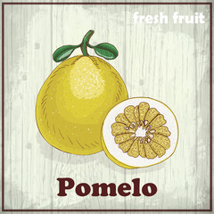 Hand drawing illustration of Pomelo