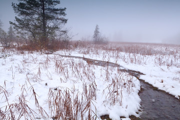 river on snowy foggy swamp