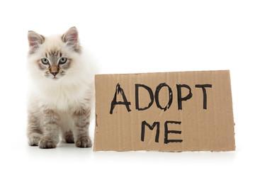 Kitty asking for adoption