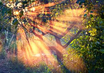 Sun rays in the garden at sunset