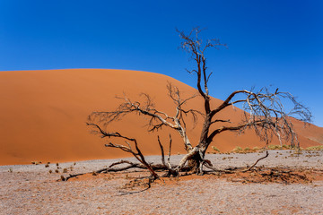 Dune 45 in sossusvlei NamibiaDune 45 in sossusvlei Namibia
