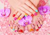 Beautiful manicure and pedicure - 74478460