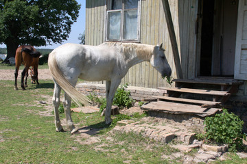 Конь хочет войти в дом