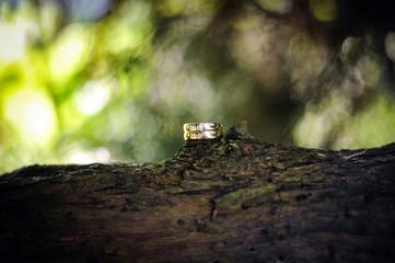 eheringe auf einem Baum