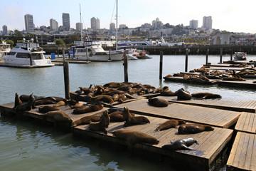 sea Lion San Francisco