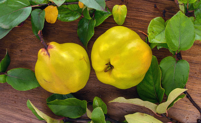 two ripe yellow quince