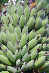 bananeto coltivazione banane sudafrica